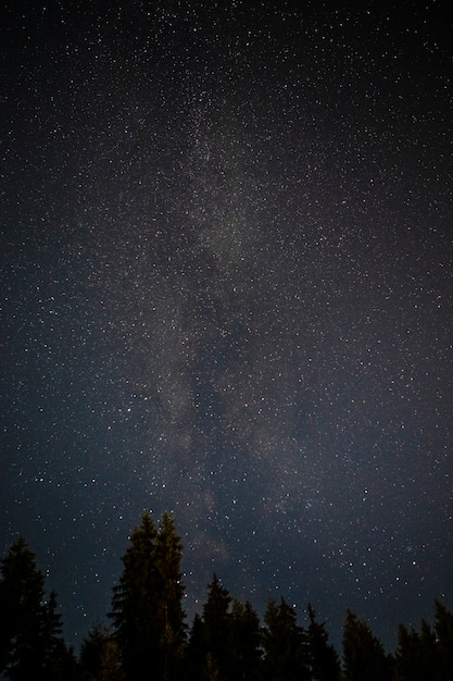 Evergreen tree tops with starry night sky Free Photo