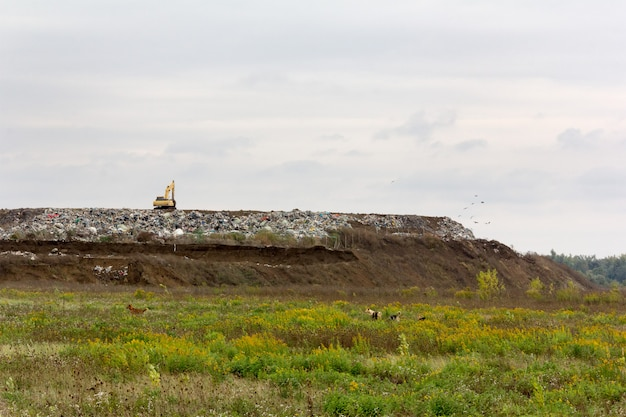 Excavator at a garbage dump and stray dogs on a green meadow Premium Photo