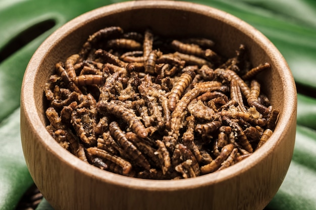 Exotic fried silkworms in a bowl close view Free Photo