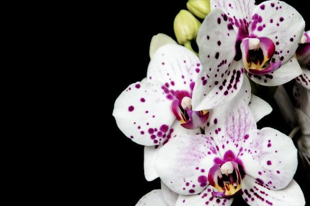 Exotic orchids Premium Photo