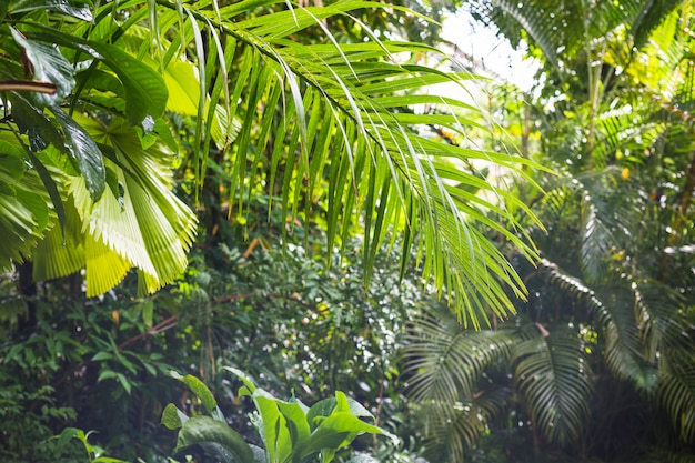 Exotic tropical foliage in rain forest Premium Photo