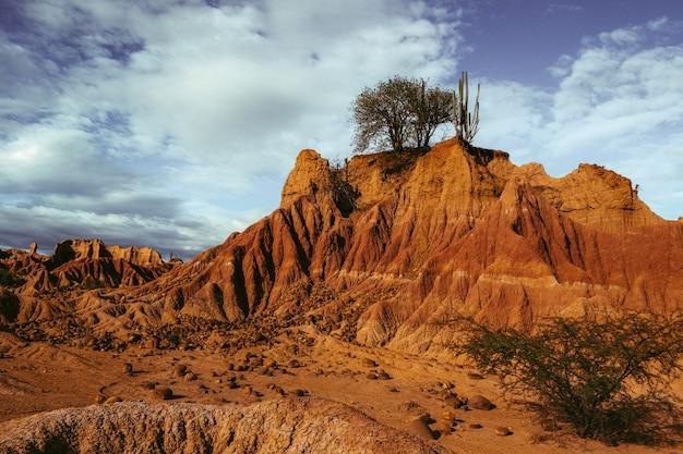 Экзотическое дикое растение, растущее на скалах в пустыне татакоа, колумбия, под голубым небом Бесплатные Фотографии