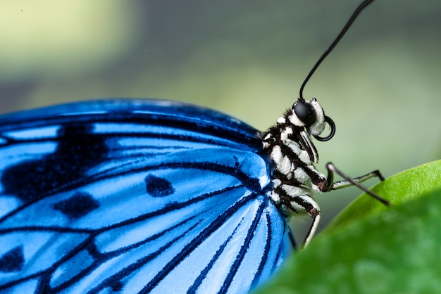 Extreme close up bright blue butterfly Free Photo