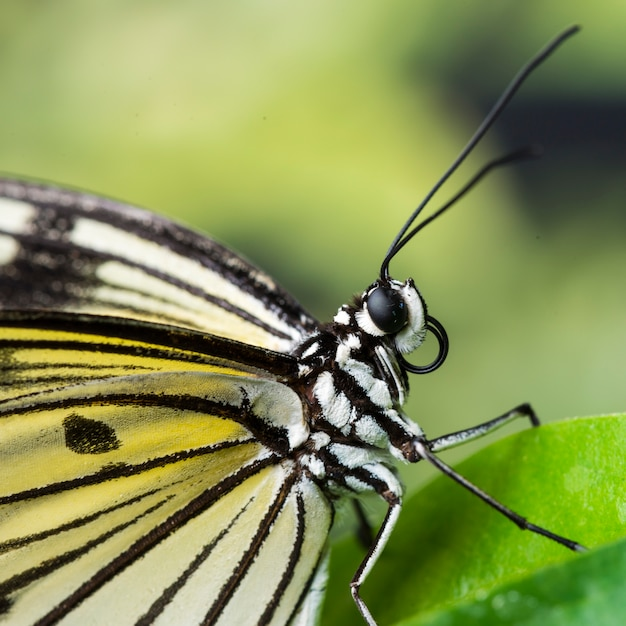 Extreme close up butterfly on leaf Photo | Free Download