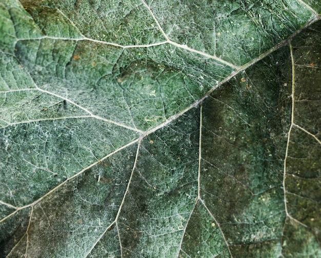 Extreme close-up green leaf texture Free Photo