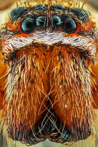Extreme close up of spider Premium Photo
