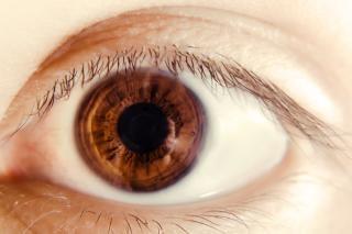Eye , eyelid Free Photo