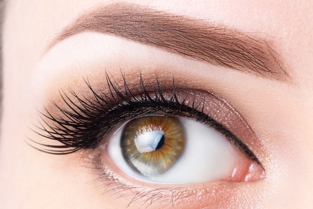 Eye with long eyelashes and light brown eyebrow close-up. eyelashes lamination, microblading Premium Photo