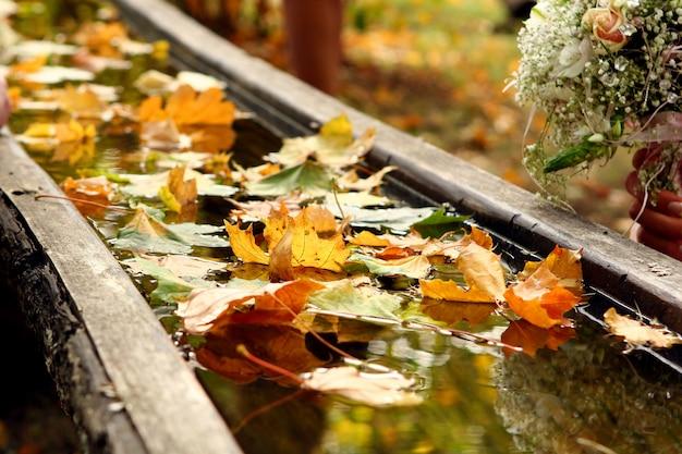 Осенний день фоновое изображение f Бесплатные Фотографии