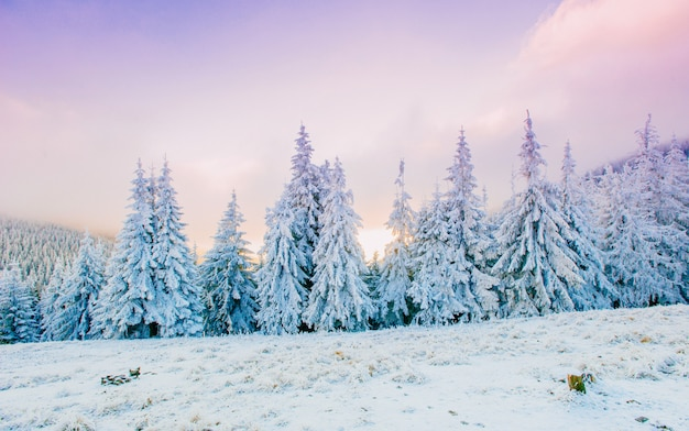 Fabulous winter landscape Premium Photo