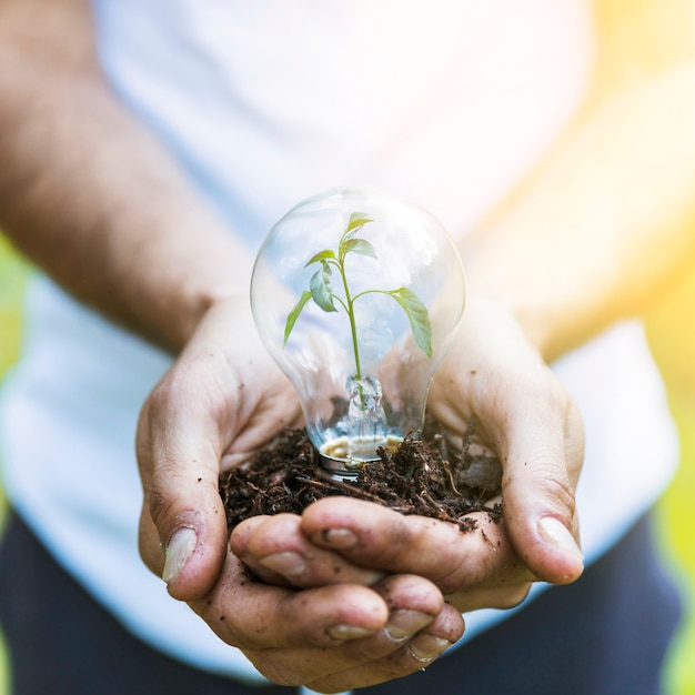 Faceless man keeping bulb with plant Free Photo