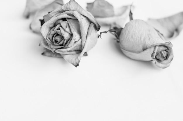 色あせた花。死んだバラ枯れたバラのフレーム。 Premium写真