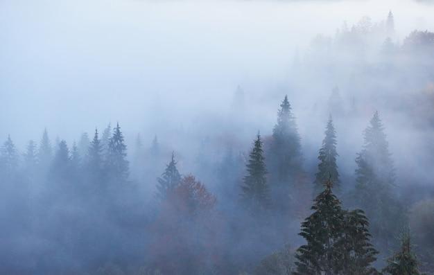 아침에 산 숲 풍경에 요정 일출. 프리미엄 사진