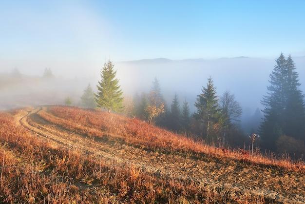 朝の山林風景の中の妖精の日の出。 無料写真