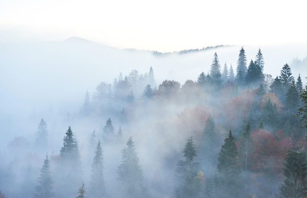 Fairy sunrise in the mountain forest landscape in the morning. Free Photo