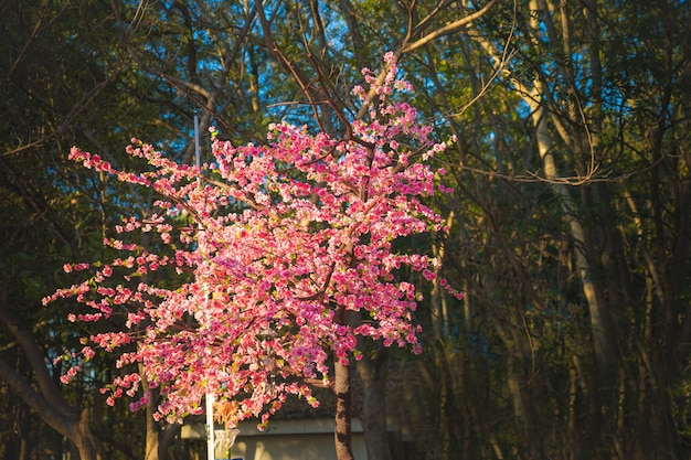 Fake sakura flowers for decoration with forest Premium Photo