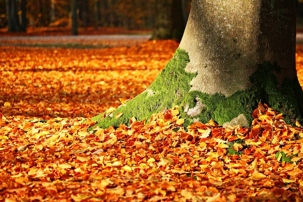 Fall foliage autumn Premium Photo