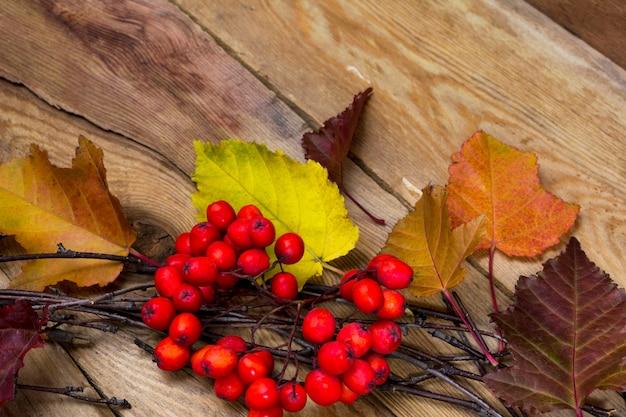 葉と熟したナナカマドの果実と秋の素朴な背景 Premium写真