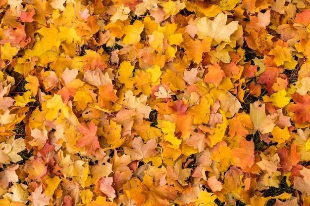 Fallen autumn leaves Premium Photo