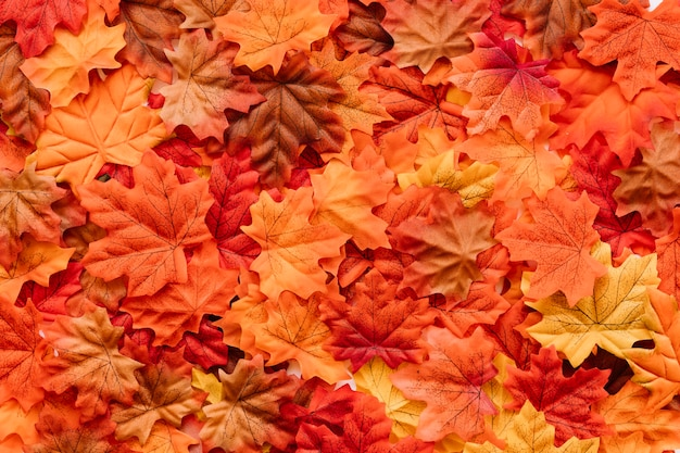 Fallen leaves canvas Free Photo