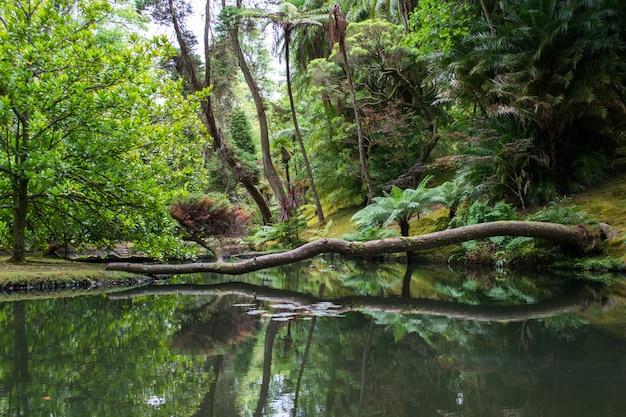 Упавшее дерево, отражая в озере в маунт-рейнир национальный парк, сиэтл, штат вашингтон Бесплатные Фотографии