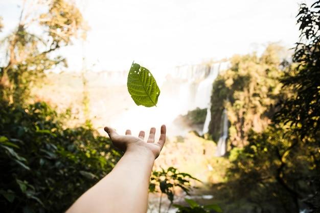 Falling leaf with blurred background Free Photo