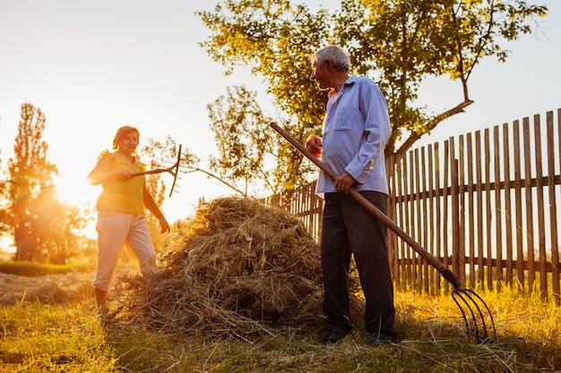 Family couple of farmers gather hay with pitchfork at sunset in countryside. Premium Photo