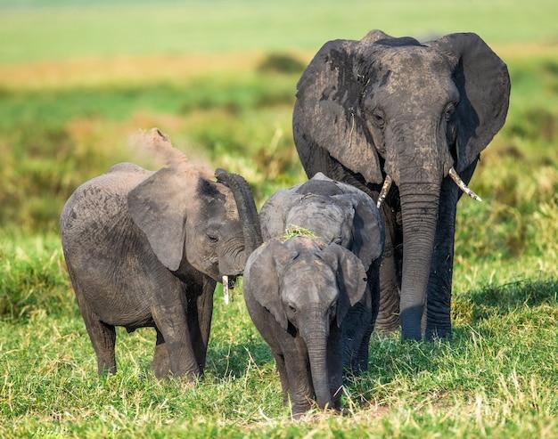 サバンナの象の家族。 Premium写真