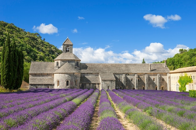 Знаменитое аббатство сенанк и цветы лаванды. франция. Бесплатные Фотографии