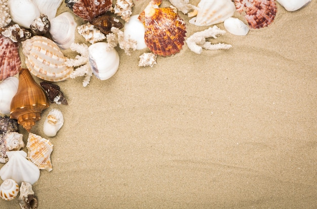 Fantastic background with sand and seashells Free Photo