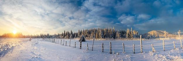Фантастическое голубое небо и заснеженные деревья Premium Фотографии