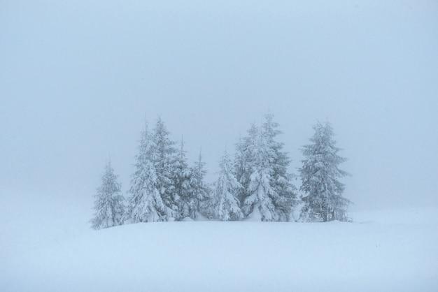 幻想的な冬の風景です。休日の前夜。ドラマチックなシーン。カルパチア、ウクライナ、ヨーロッパ。明けましておめでとうございます 無料写真