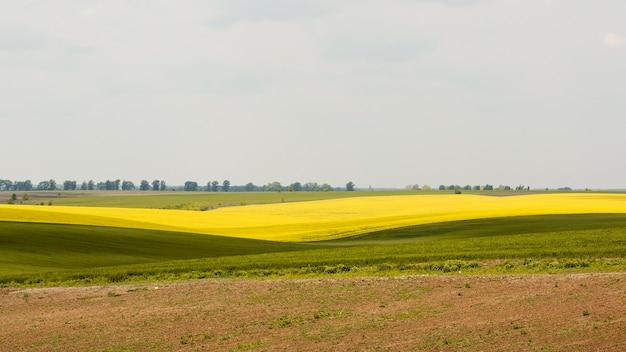Farm field landscape Free Photo
