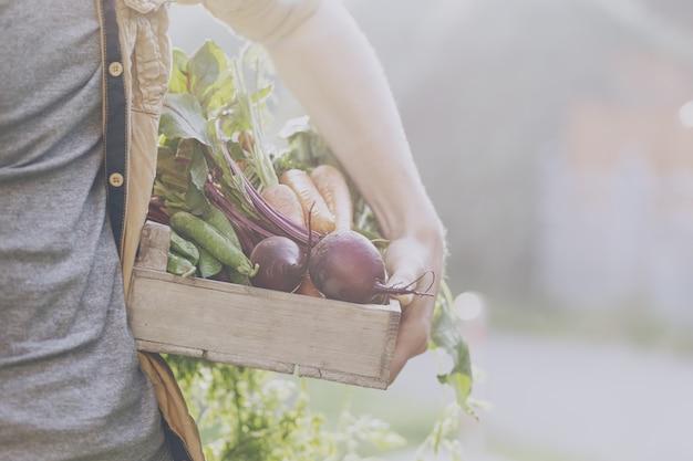 Farmer adult man holding fresh tasty vegetables in wooden box in garden early morning 1220 1713