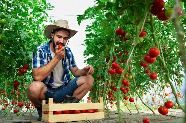 トマト野菜を噛み、温室内の有機食品の品質をチェックする農家 無料写真