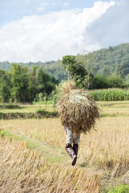 ストローを運ぶ農家。 Premium写真