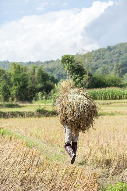Farmer carrying a straw. Premium Photo