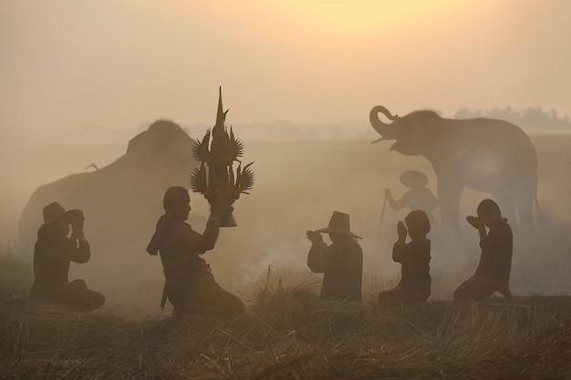 Farmer doing harvest ceremony in rice field with elephants Premium Photo