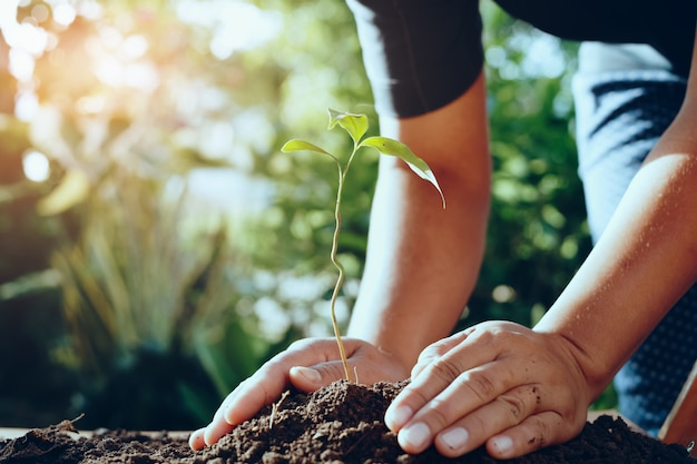 Farmer hand planting tree in gardren for save world Premium Photo
