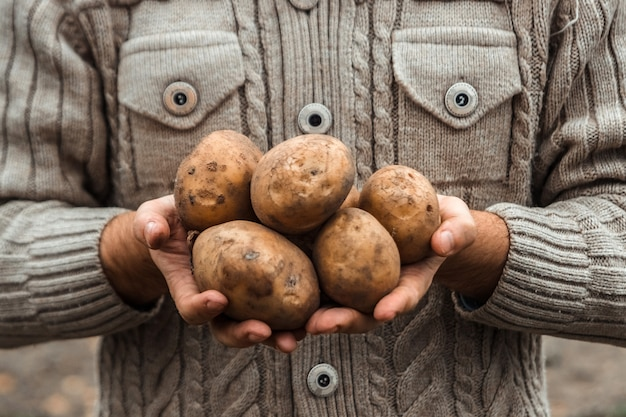 Farmer holding in hands the harvest of potatoes in the garden. Premium Photo
