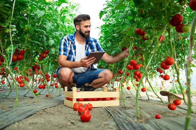 Agricoltore che tiene compressa e controlla la qualità delle verdure di pomodoro mentre si trovava nell'azienda agricola biologica Foto Gratuite