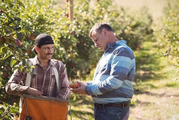 Farmer interacting with coworker in apple orchard Free Photo