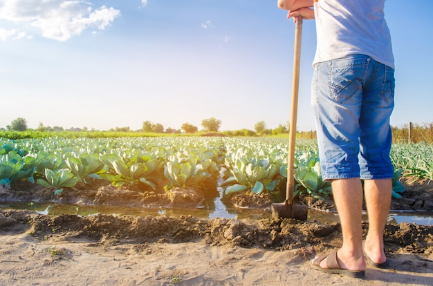 The farmer is watering the field. irrigation. Premium Photo