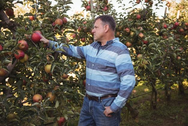 Farmer looking at apples Free Photo