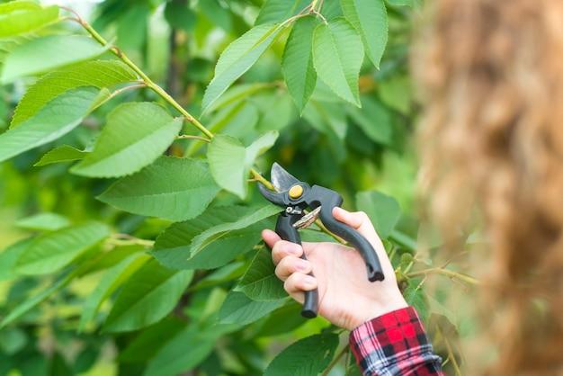 果樹園で果樹の枝を剪定する農民 無料写真