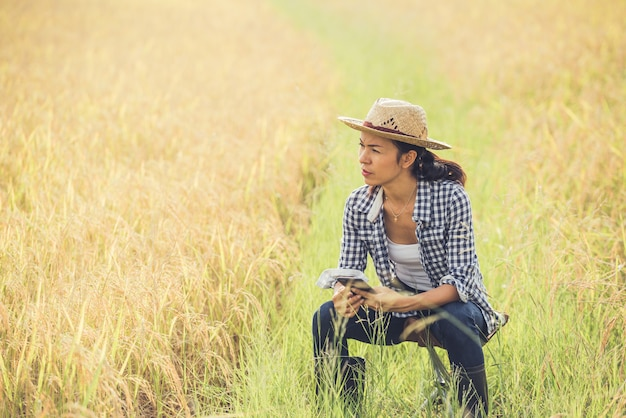 Farmer in rice field with smartphone Free Photo