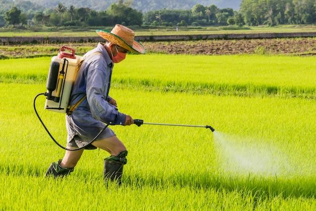 Farmer spraying pesticide on rice field Premium Photo
