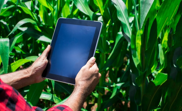 Farmer using digital tablet computer, cultivated corn plantation in background Premium Photo