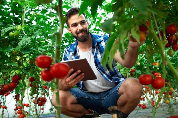 Contadino con computer tablet che controlla la qualità e la freschezza delle verdure di pomodoro nell'azienda agricola biologica Foto Gratuite