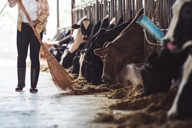 農家の女性が牛に給餌しています。草を食べる牛 無料写真